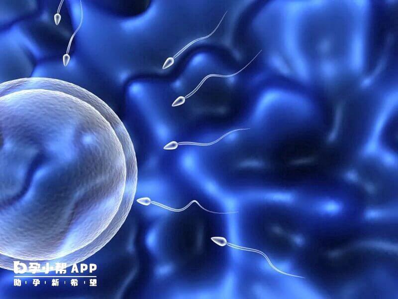 供精试管婴儿的成功率并不低