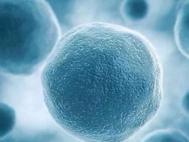 冻胚值试管移植中一个重要存在方式